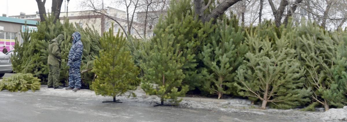 Где купить елку к Новому году