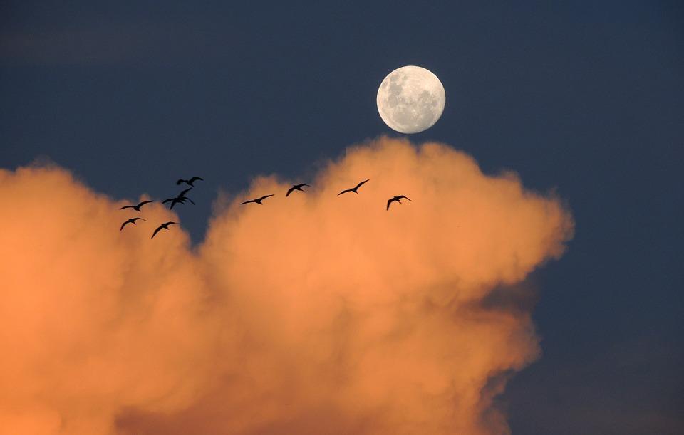 Лунный календарь садово-огородных работ на февраль