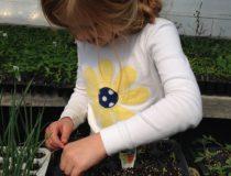 Стимулятор для семян
