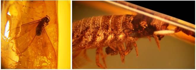 Янтарные самородки с доисторическими насекомыми