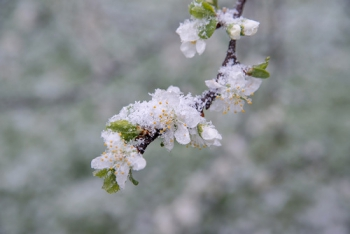 В Оренбуржье ожидаются заморозки