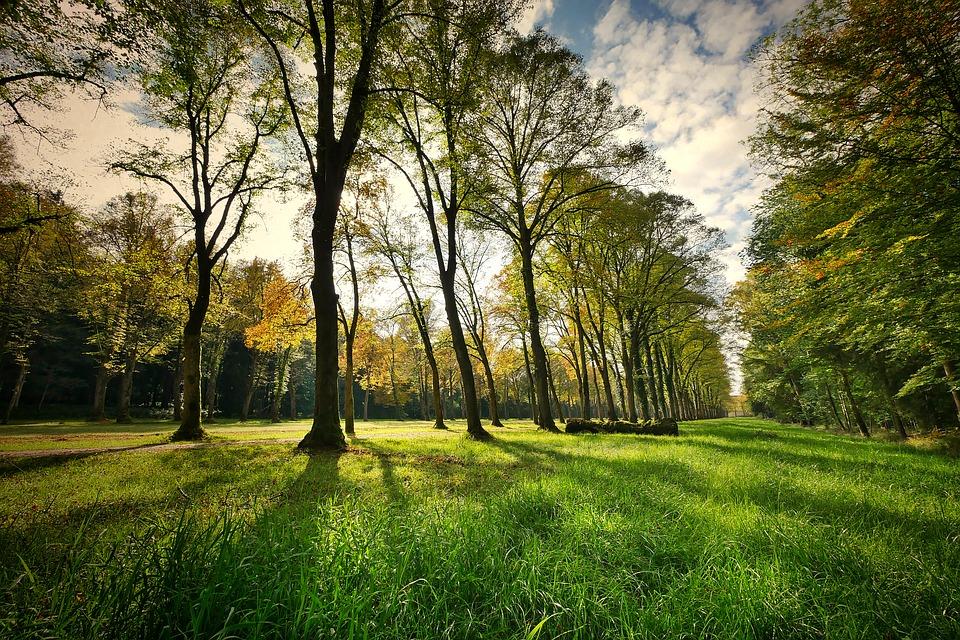 В Оренбурге могут создать городской ландшафтный парк в районе улицы Березка