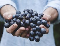 Виноград: болезни и лечение